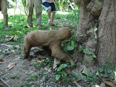 Projects Abroad staff and volunteers release a sloth into the Taricaya Ecological Reserve in Peru, South America.