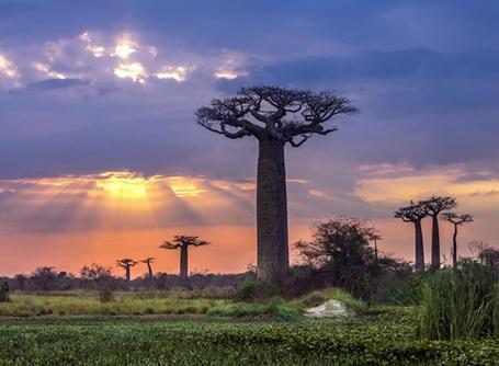 La forêt tropicale à Madagascar