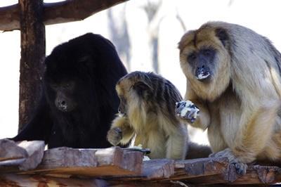 Chantier de Protection des animaux en Argentine