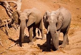 Écovolontariat dans le Bushveld africain