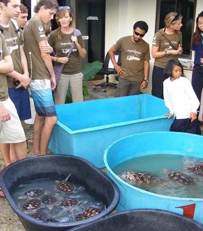 Soins animaliers, écovolontariat Thaïlande