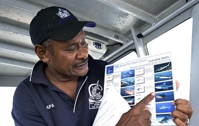 Etudes pour la préservation des requins du Pacifique