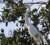 Bird Species list for Laguna Colorado