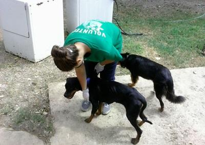 Bénévole avec des chiens au sein du centre de sauvetage