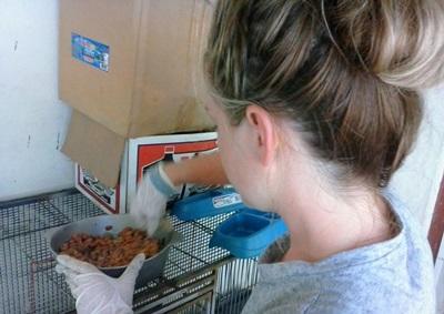 Volontaire qui prépare la nourriture pour les animaux