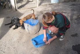 Médecine vétérinaire & <br /> soins animaliers