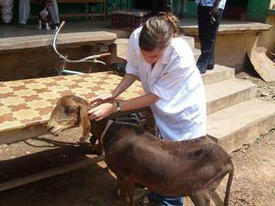 Stage médecine vétérinaire en Afrique