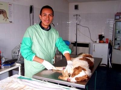 Stage médecine vétérinaire ASV