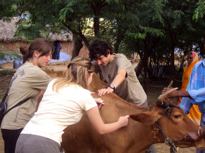 projet médecine vétérinaire au Sri Lanka