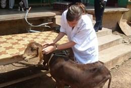 Médecine vétérinaire & soins <br />animaliers