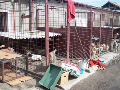 Soigner des chiens abandonnés à l'étranger