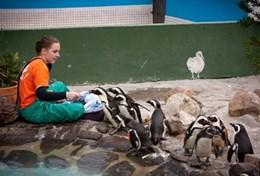 Médecine vétérinaire & <br />soins animaliers