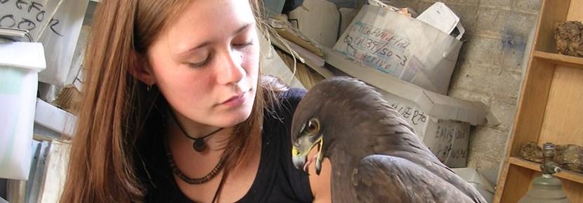Une volontaire  s'occupe d'un aigle lors de son voyage humanitaire auprès d'animaux à l'étranger