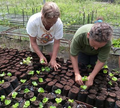 Des volontaires plantent des arbres dans une pépinière pendant leur mission d'écovolontariat en Equateur