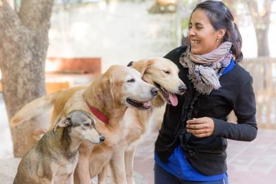 Une volontaire professionnel en médecine vétérinaire avec des chiens en Argentine