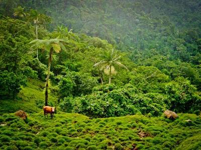 Bénévole soins animaliers Samoa