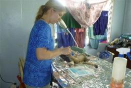 Médecine vétérinaire