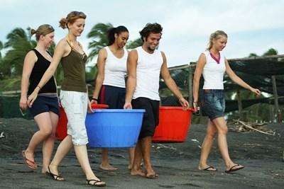 Volotnaires avec sceaux sur la plage