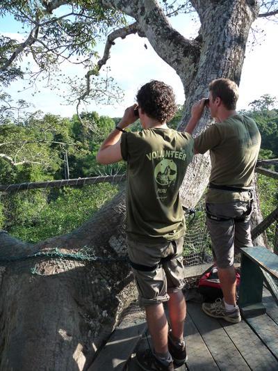 Deux volontaires observent la faune depuis une passerelle lors de leur mission d'écovolontariat au Pérou.