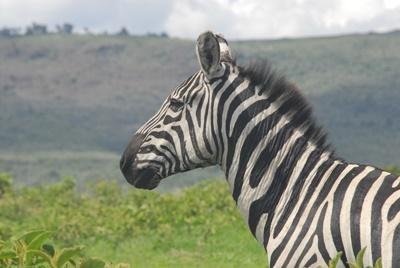 Faire une mission d'ecovolontariat en Afrique, Kenya.