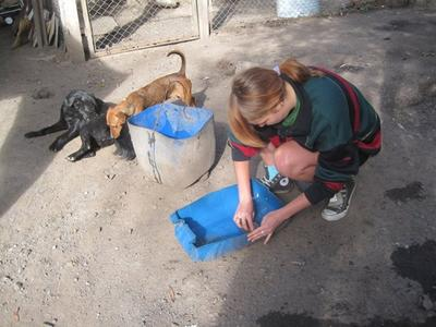 Help with maintenance at a dog shelter in Argentina on the Animal Care volunteer project