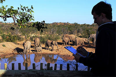 A Projects Abroad volunteer takes part in an elephant research activity at his placement in Botswana.