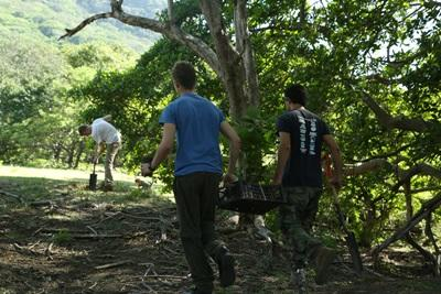 Volunteers work towards forest conservation on an Environmental Conservation Project with Projects Abroad