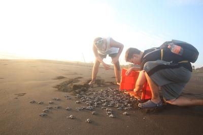 Volunteers release turtle hatchlings into the ocean on their Conservation Project in Mexico