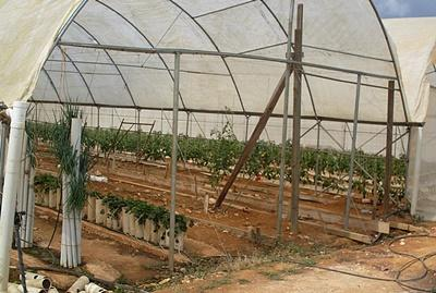 Agriculture & Farming project in Jamaica