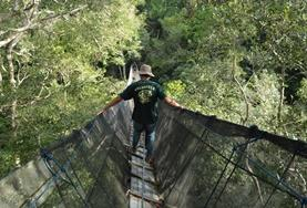 A Conservation volunteer travels across a treetop walkway during his Spring Break in the Amazon, Peru.