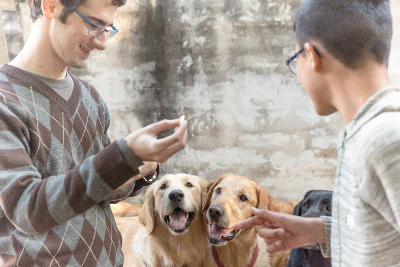 A local patient and therapist work with dogs during a therapy session in Argentina at the Projects Abroad Canine Therapy Project.
