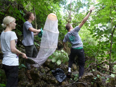 Projects Abroad volunteers hellp protect butterfly species at the Conservation Project in Costa Rica.