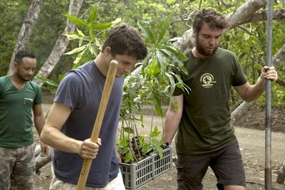 Projects Abroad volunteers move tree saplings to be planted as part of a reforestation program in Costa Rica.