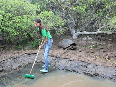 Projects Abroad volunteer cleans the pond at a tortoise breeding centre in the Galapagos, Ecuador.