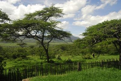 The reserve where Projects Abroad Conservation volunteers work in Kenya, East Africa.