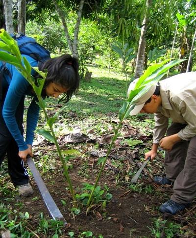 Projects Abroad volunteers inspect local vegetation for invasive species in the Amazon Rainforest, Peru.