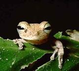 Amphibian List