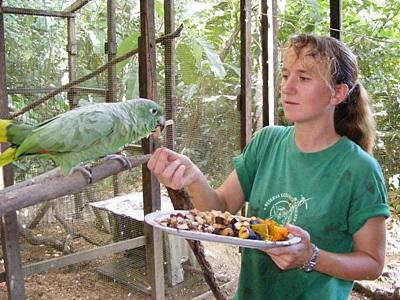 A Projects Abroad volunteer feeds a bird being rehabilitated at the Conservation Project in Peru.