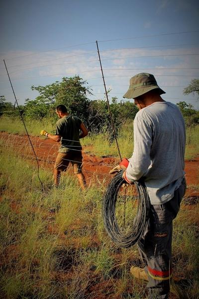 Projects Abroad volunteers remove a fence that is threatening wildlife in Botswana, Southern Africa, at their Conservation Project.