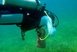A volunteer takes part in a survey dive as part of his marine conservation work in Belize.
