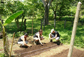 Volunteers on the Costa Rica Tropical Dry Rainforest Conservation Project work in Barra Honda National Park.