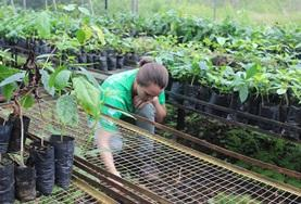 A volunteer on the Galapagos Island Conservation Project in Ecuador helps maintain a plant nursery.