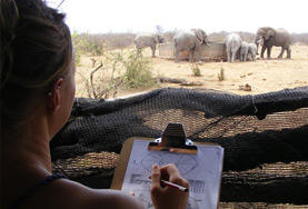 Volunteer in South Africa: Conservation & Environment