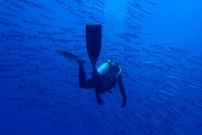A Projects Abroad Conservation volunteer on a dive swims in the middle of a shoal in Fiji.