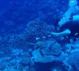 Elasmobranchs and Turtles Species list