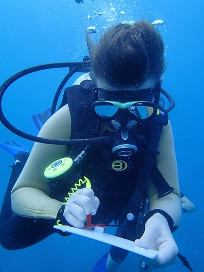 A Shark Conservation volunteer with Projects Abroad records data during a survey dive in Fiji, South Pacific.
