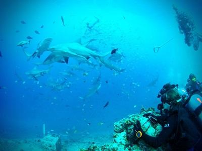 A Projects Abroad volunteer participates in an observation dive on the Shark Conservation project in Fiji.