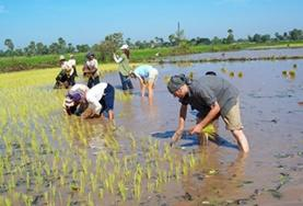 Grown-Up Special volunteers on the Khmer Project in Cambodia work with locals in a rice farm.