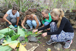 Care & Conservation High School Special volunteers feed tortoises as part of their project work.