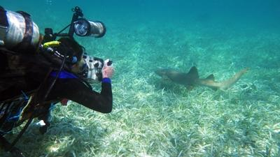 A diver in Belize takes a photo of a shark on a survey dive off the Belize Barrier Reef.